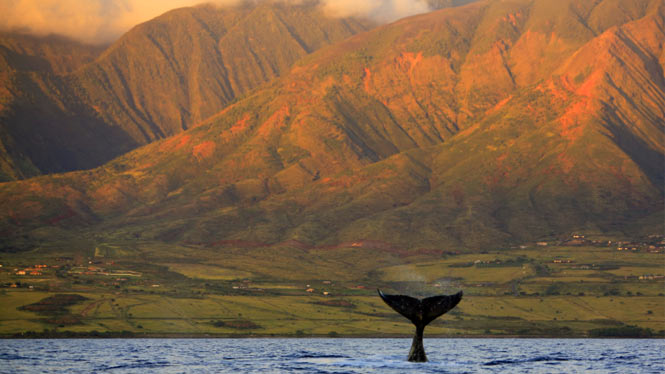 Hawaii whale watching off the coast of Maui