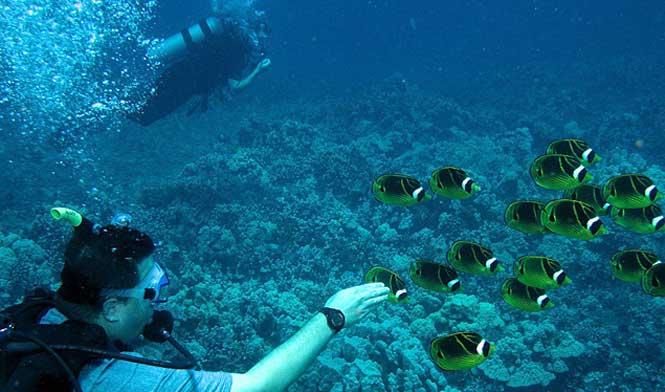 Scuba diving Lanai