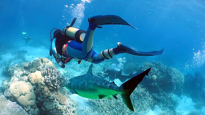 Scuba diver next to a friendly reef shark