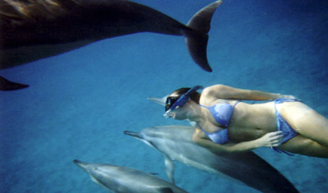 Lady snorkeling with dolphins
