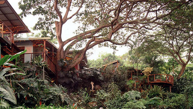 Upscale tree house living at the Dragonfly Ranch