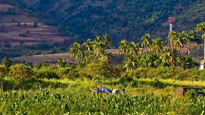 Farming below the Waianae mountain range
