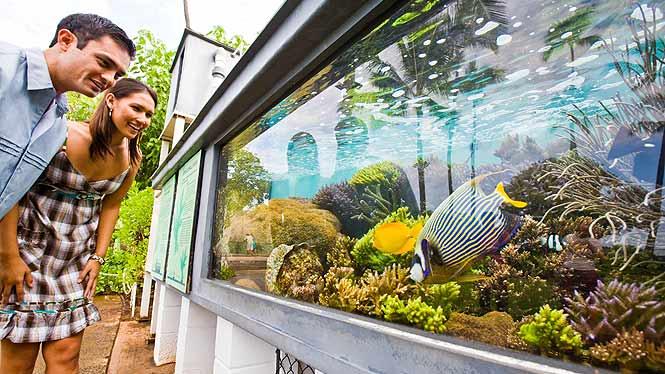 a couple enjoying the waikiki aquarium