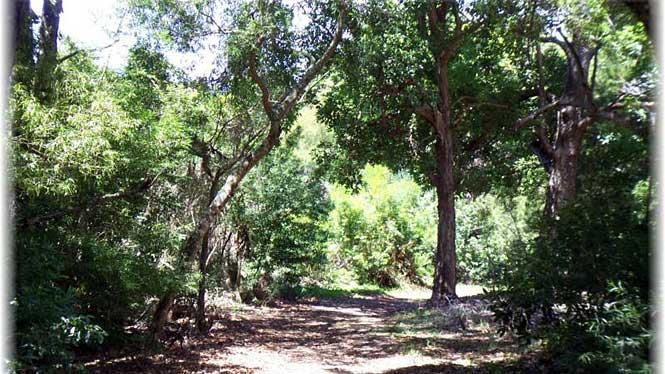 Keaiwa Heiau State Recreation Area