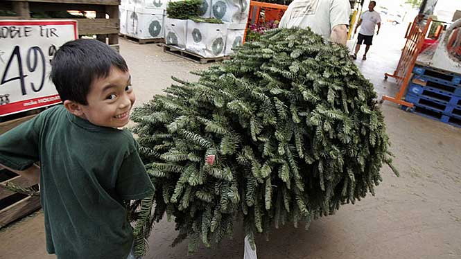 Kid picking out his Christmas Tree in Hawaii