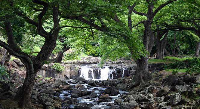 Foster's Botanical Garden