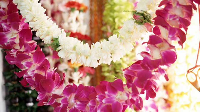 A beautiful pair of Hawaiian Flower Leis