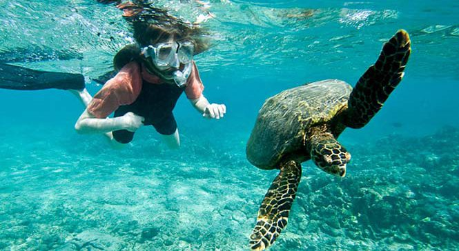 Lady snorkeling with sea turtle, Kaanapali Maui