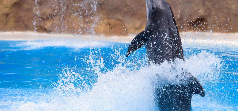Dolphin Quest Oahu
