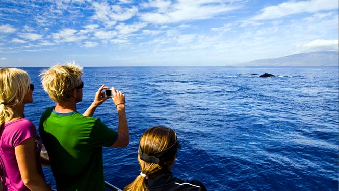 Hawaii whale watching tour off the coast of Lanai.