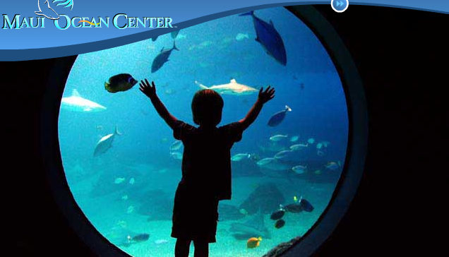 Maui Ocean Center is large part of Maui's entertainment