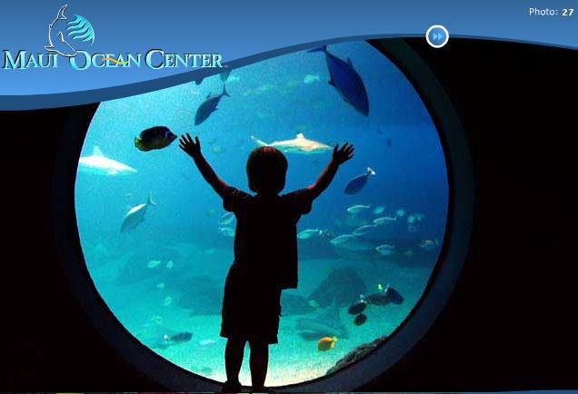 Maui Ocean Center is large part of Maui's entertainment