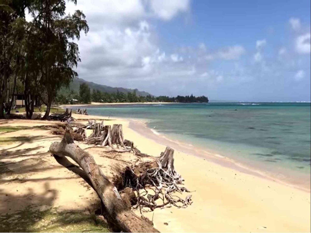 Punaluu Beach on the island of Oahu during the day. White sands beach with logs on beach.