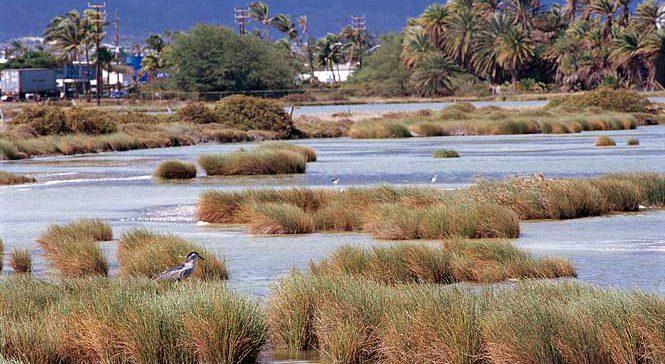Kanaha Pond Wildlife Sanctuary
