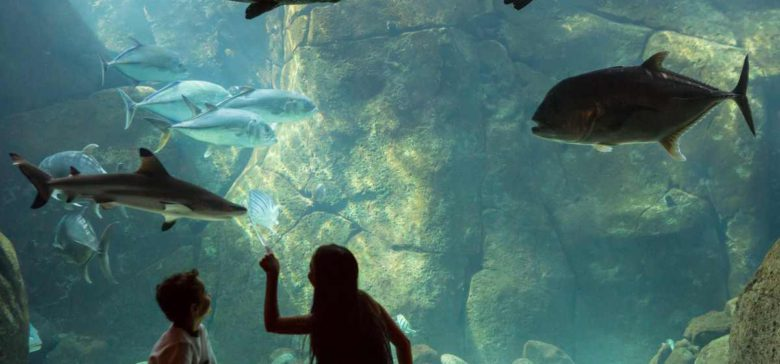 Waikiki Aquarium is one of many fun things to do in Hawaii
