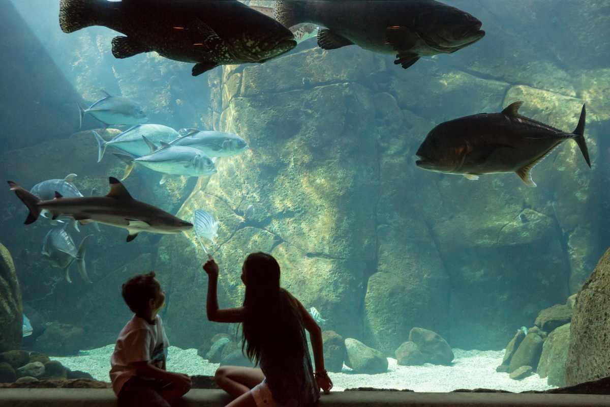 Waikiki Aquarium is one of many fun things to do in Hawaii
