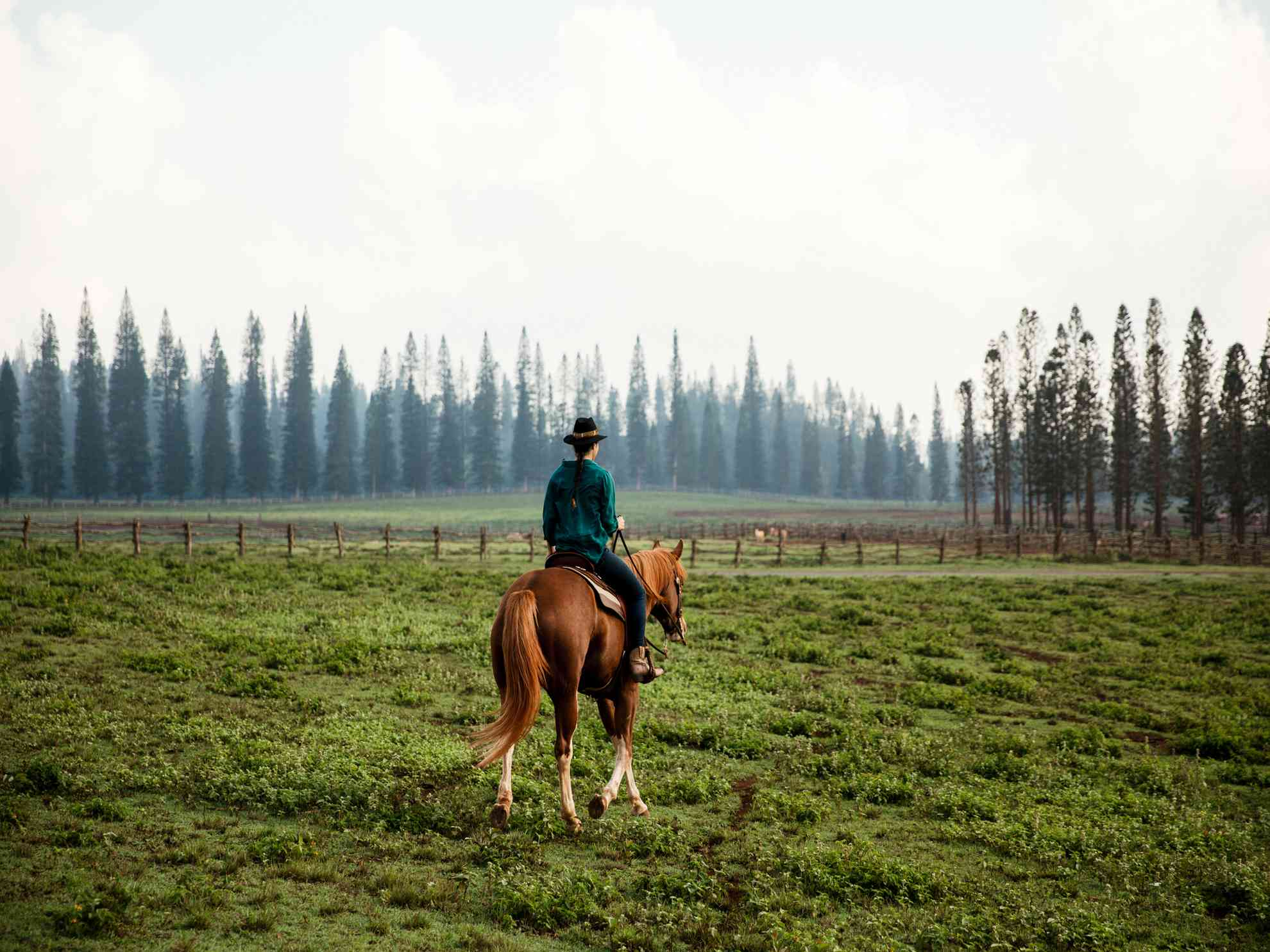 A girl riding a horse on Lanai with pine trees in background.