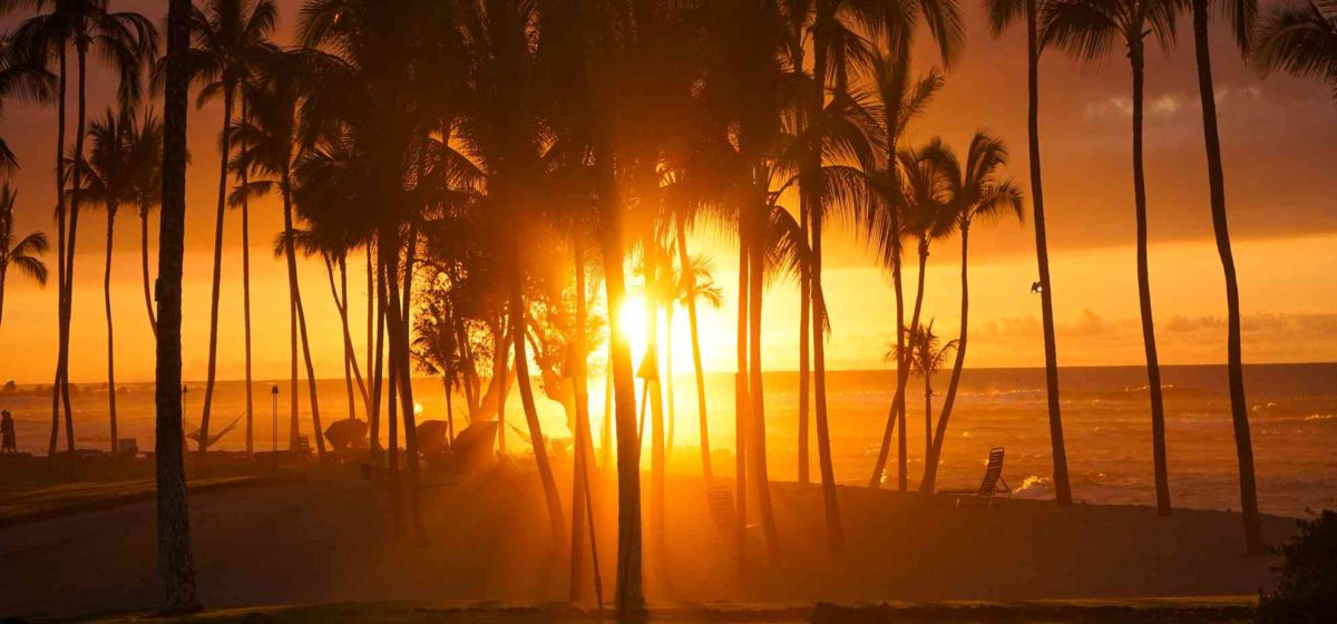 Sunset as seen through the palm trees looking out to the ocean
